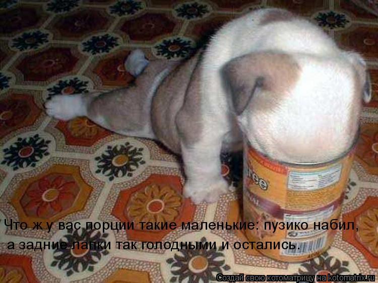 Котоматрица: Что ж у вас порции такие маленькие: пузико набил,  а задние лапки так голодными и остались.