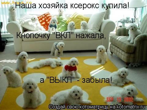 """Котоматрица: Наша хозяйка ксерокс купила! Кнопочку """"ВКЛ"""" нажала,  а """"ВЫКЛ"""" - забыла!"""