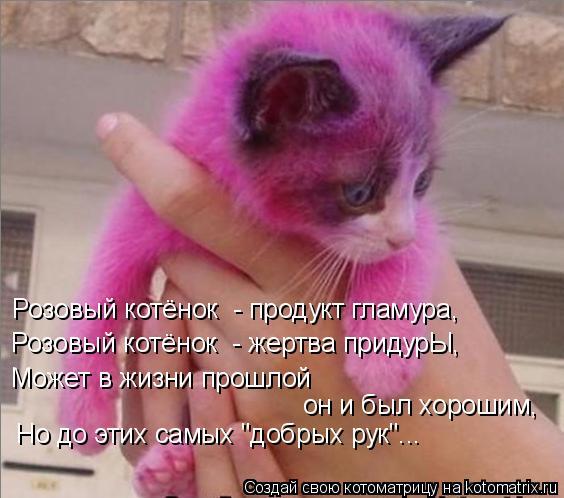 """Котоматрица: Розовый котёнок  - жертва придурЫ, Розовый котёнок  - продукт гламура, Может в жизни прошлой он и был хорошим, Но до этих самых """"добрых рук""""..."""