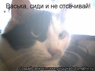 Котоматрица: Васька, сиди и не отсвчивай!