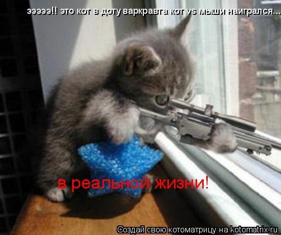 Котоматрица: эээээ!! это кот в доту варкравта кот vs мыши наигрался... в реальной жизни!