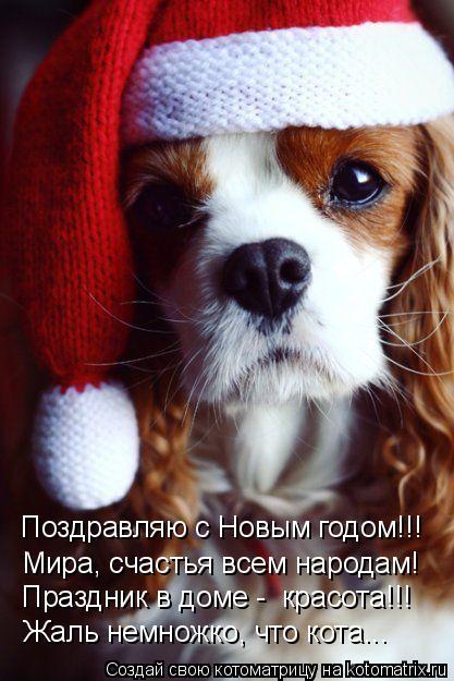 Котоматрица: Поздравляю с Новым годом!!! Праздник в доме -  красота!!! Жаль немножко, что кота... Мира, счастья всем народам!