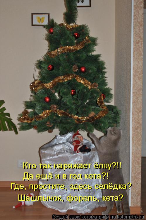 Котоматрица: Кто так наряжает ёлку?!! Да ещё и в год кота?! Где, простите, здесь селёдка? Шашлычок, форель, кета?