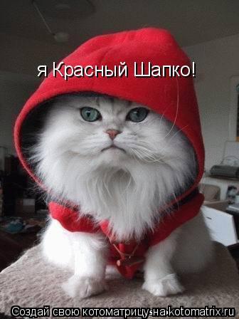 Котоматрица: я Красный Шапко!
