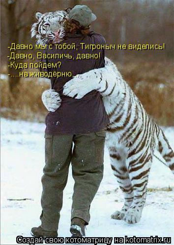 Котоматрица: -Давно мы с тобой, Тигроныч не виделись! -Давно, Василичь, давно! -Куда пойдем? -....на живодёрню....