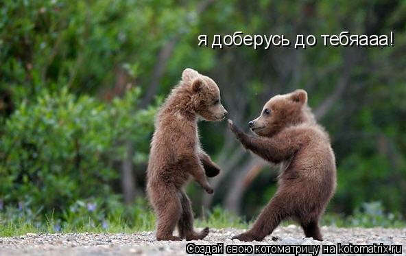 Котоматрица: я доберусь до тебяааа!