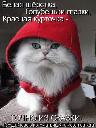 Котоматрица: Белая шёрстка, Голубеньки глазки, Красная курточка -  ТОЧНО ИЗ СКАЗКИ!