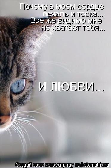 Котоматрица: Почему в моём сердце печаль и тоска... Всё же видимо мне  не хватает тебя... И ЛЮБВИ...