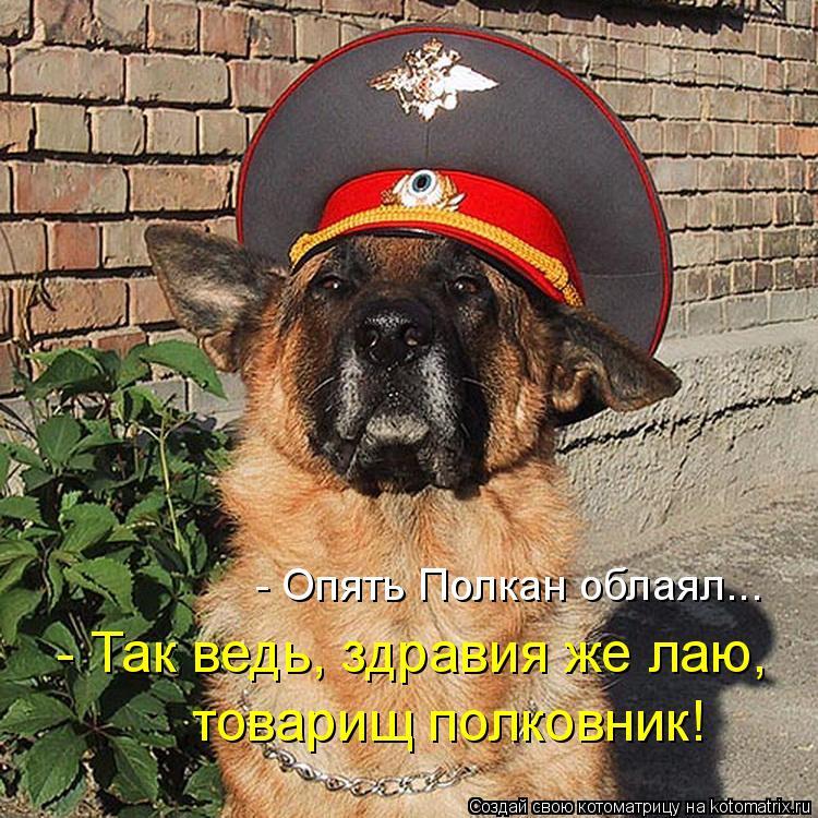 Котоматрица: - Опять Полкан облаял... - Так ведь, здравия же лаю, товарищ полковник!