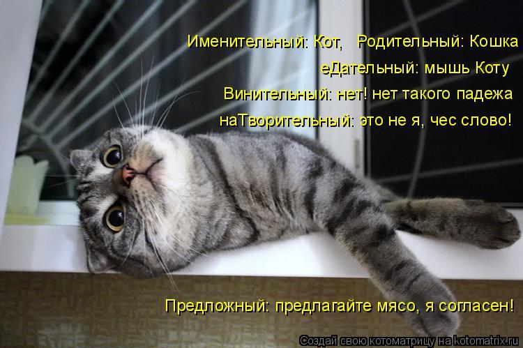 Котоматрица: еДательный: мышь Коту Винительный: нет! нет такого падежа наТворительный: это не я, чес слово! Именительный: Кот,   Родительный: Кошка Предлож