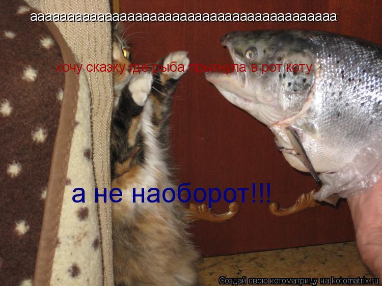 Котоматрица: ааааааааааааааааааааааааааааааааааааааааа хочу сказку где рыба прыгнула в рот коту а не наоборот!!!