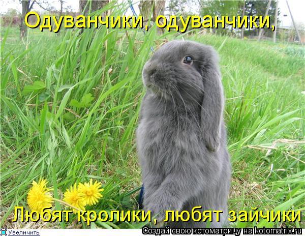 Котоматрица: Одуванчики, одуванчики, Любят кролики, любят зайчики!