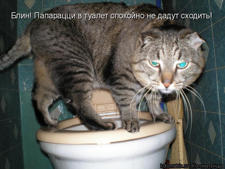 Котоматрица: Блин! Папарацци в туалет спокойно не дадут сходить!