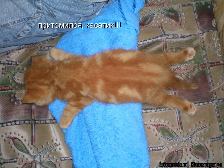 Котоматрица: притомился, касатик!!!