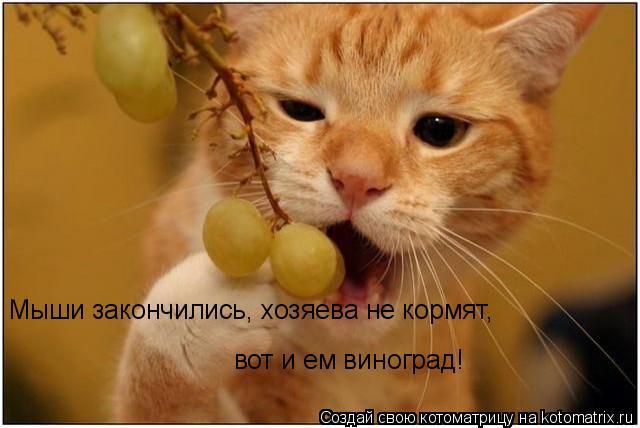Котоматрица: Мыши закончились, хозяева не кормят, вот и ем виноград!