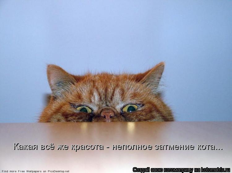 Котоматрица: Какая всё же красота - неполное затмение кота...