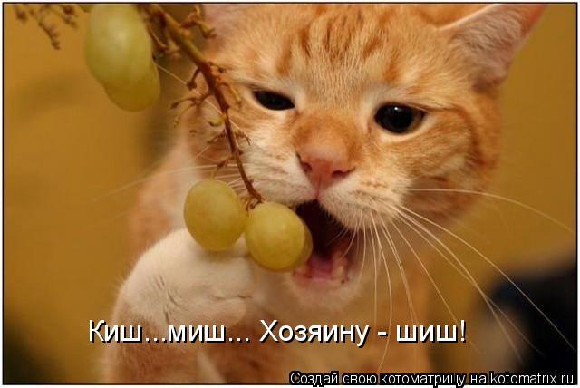 Киш...миш... Хозяину - шиш!