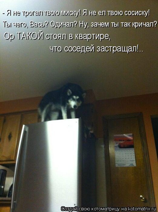 Котоматрица: - Я не трогал твою миску! Я не ел твою сосиску! Ты чего, Вась? Одичал? Ну, зачем ты так кричал? Ор ТАКОЙ стоял в квартире,  что соседей застращал!.