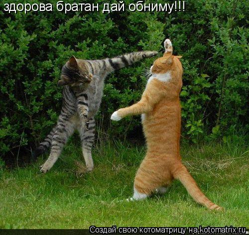 Котоматрица: здорова братан дай обниму!!!