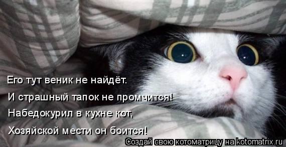Котоматрица: И страшный тапок не промчится! Набедокурил в кухне кот, Его тут веник не найдёт. Хозяйской мести он боится!
