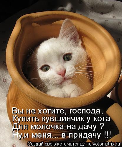 Котоматрица: Вы не хотите, господа, Купить кувшинчик у кота  Ну,и меня... в придачу !!! Для молочка на дачу ?