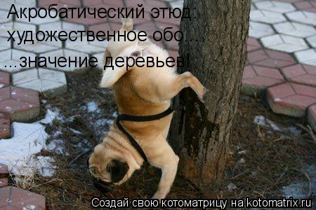Котоматрица: Акробатический этюд: художественное обо... ...значение деревьев!