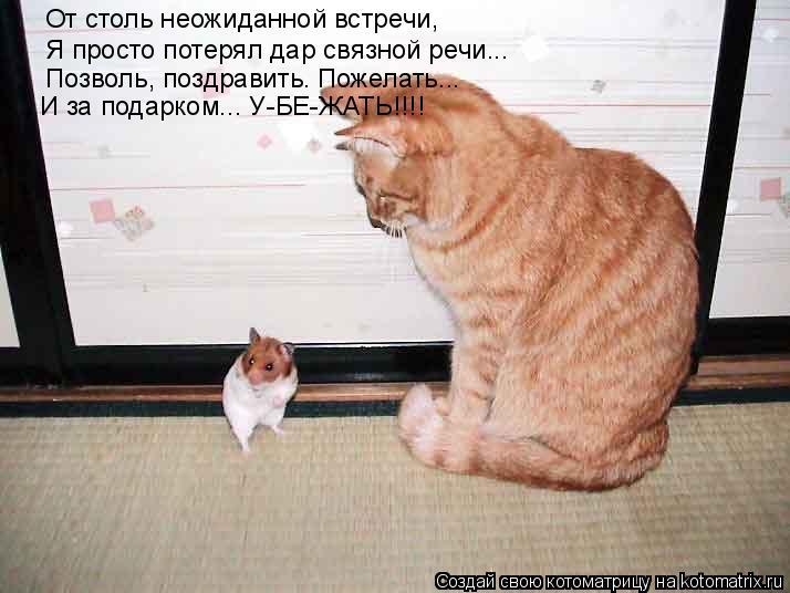 Котоматрица: От столь неожиданной встречи, Я просто потерял дар связной речи... Позволь, поздравить. Пожелать... И за подарком... У-БЕ-ЖАТЬ!!!!