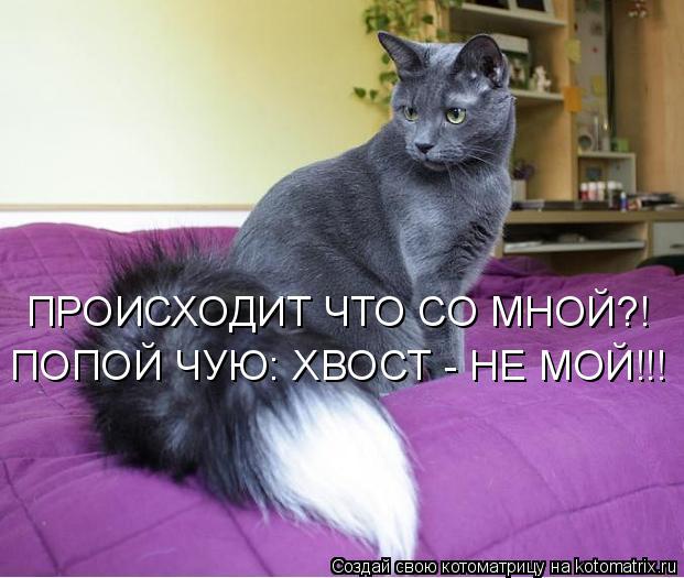 Котоматрица: ПРОИСХОДИТ ЧТО СО МНОЙ?! ПОПОЙ ЧУЮ: ХВОСТ - НЕ МОЙ!!!