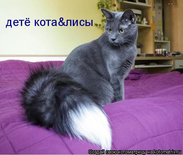 Котоматрица: детё кота&лисы