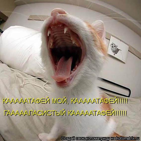 Котоматрица: КАААААТАФЕЙ МОЙ, КАААААТАФЕЙ!!!!! ГАААААЛАСИСТЫЙ КАААААТАФЕЙ!!!!!!