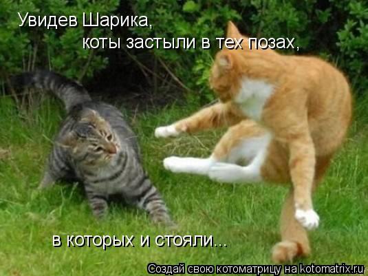 Котоматрица: Увидев Шарика, коты застыли в тех позах, в которых и стояли...