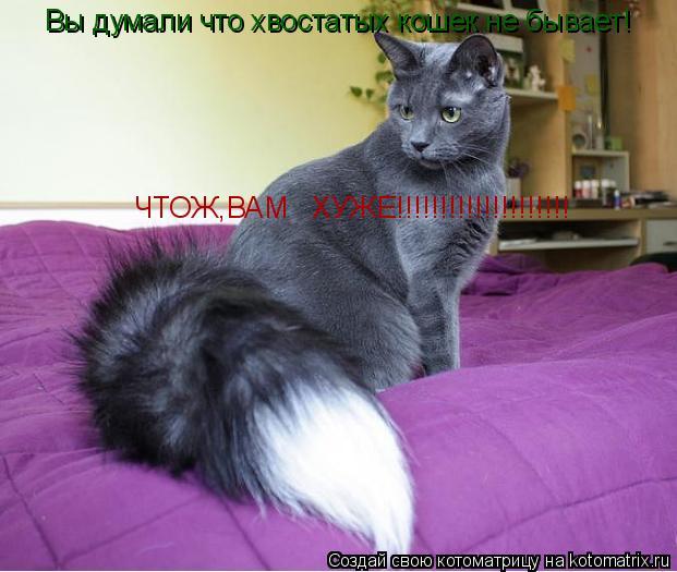 Котоматрица: Вы думали что хвостатых кошек не бывает! Вы думали что хвостатых кошек не бывает! ЧТОЖ,ВАМ   ХУЖЕ!!!!!!!!!!!!!!!!!!!!