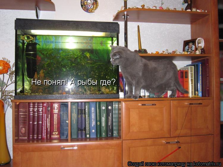 Котоматрица: Не понял! А рыбы где?