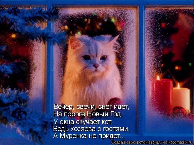 Котоматрица: Вечер, свечи, снег идет, На пороге Новый Год. У окна скучает кот. Ведь хозяева с гостями, А Муренка не придет...