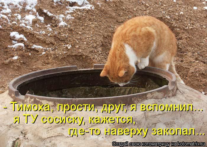 Котоматрица: - Тимоха, прости, друг, я вспомнил... где-то наверху закопал... я ТУ сосиску, кажется,