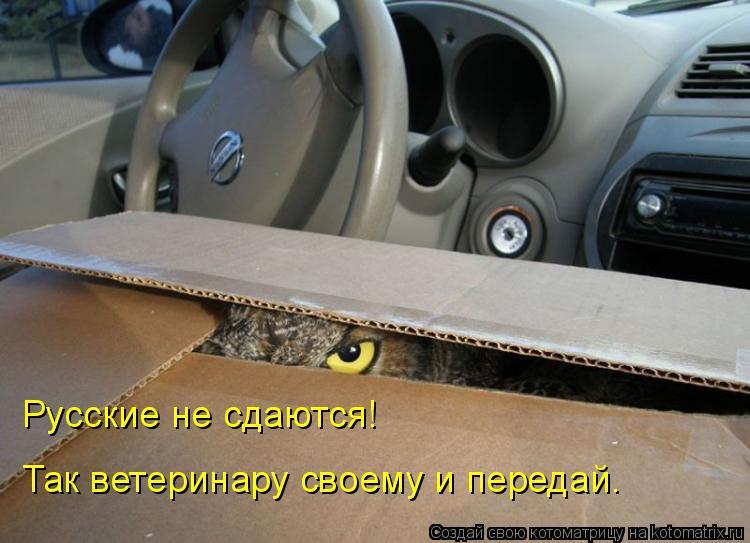 Котоматрица: Русские не сдаются! Так ветеринару своему и передай.