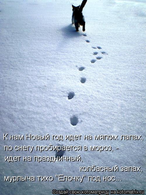 """Котоматрица: мурлыча тихо """"Елочку"""" под нос... колбасный запах, идет на праздничный,  по снегу пробирается в мороз, - К нам Новый год идет на мягких лапах,"""