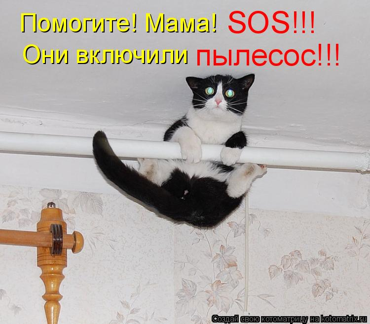 Котоматрица: Помогите! Мама! SOS!!! Они включили  пылесос!!!