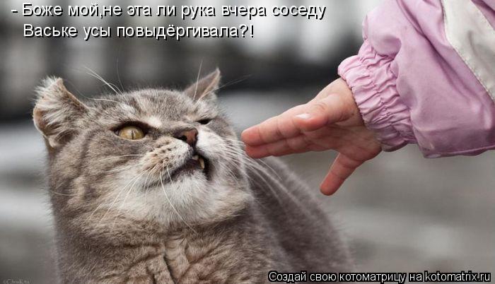 Котоматрица: - Боже мой,не эта ли рука вчера соседу  Ваське усы повыдёргивала?!