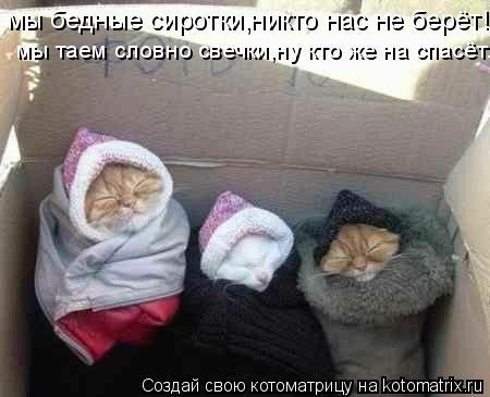 Котоматрица: мы бедные сиротки,никто нас не берёт! мы таем словно свечки,ну кто же на спасёт...