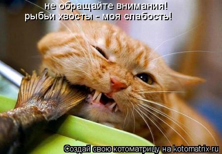 Котоматрица: не обращайте внимания! рыбьи хвосты - моя слабость!