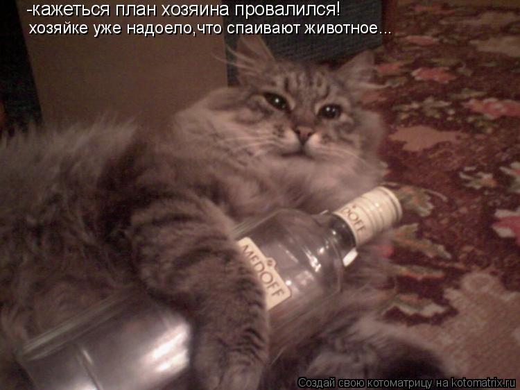 Котоматрица: хозяйке уже надоело,что спаивают животное... -кажеться план хозяина провалился!