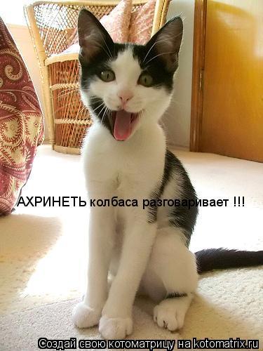 Котоматрица: АХРИНЕТЬ колбаса разговаривает !!!