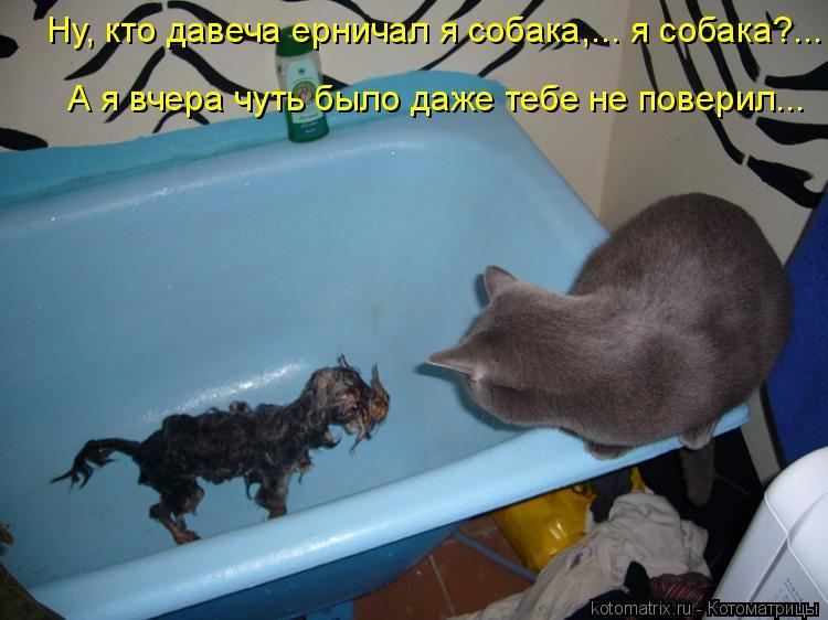 Котоматрица: Ну, кто давеча ерничал я собака,... я собака?...  А я вчера чуть было даже тебе не поверил...
