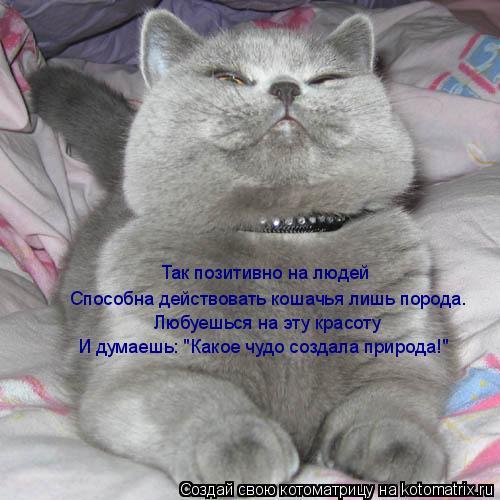 """Котоматрица: Так позитивно на людей  Способна действовать кошачья лишь порода. Любуешься на эту красоту И думаешь: """"Какое чудо создала природа!"""""""