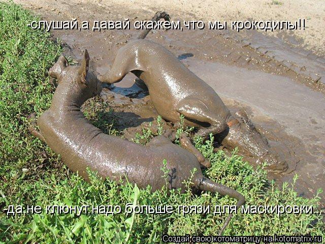 Котоматрица: -да,не клюнут,надо больше грязи для маскировки.. -слушай,а давай скажем,что мы крокодилы!!
