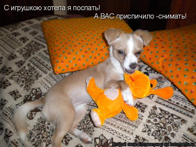 Котоматрица: С игрушкою хотела я поспать! А ВАС приспичило -снимать!
