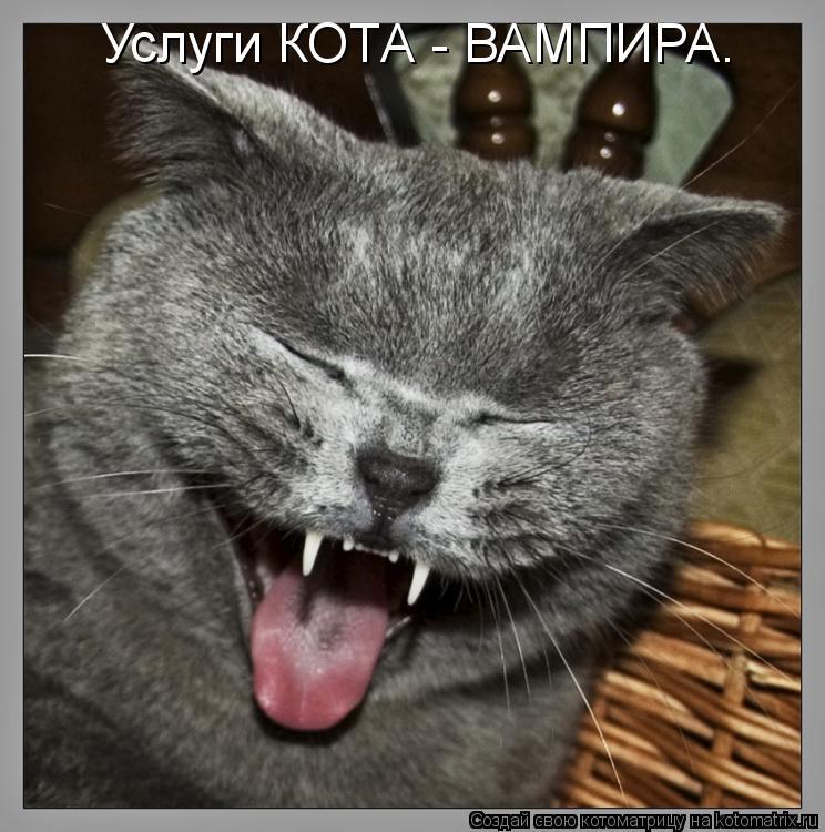 Котоматрица: Услуги КОТА - ВАМПИРА.