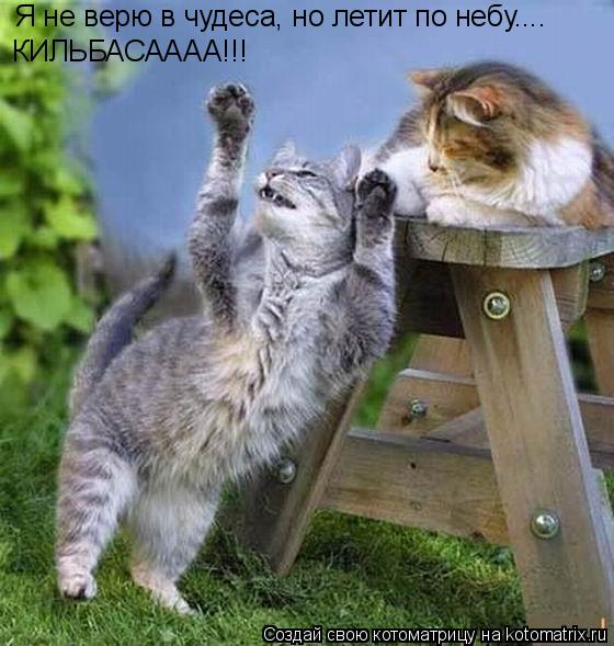 Я не верю в чудеса, но летит по небу.... КИЛЬБАСАААА!!!