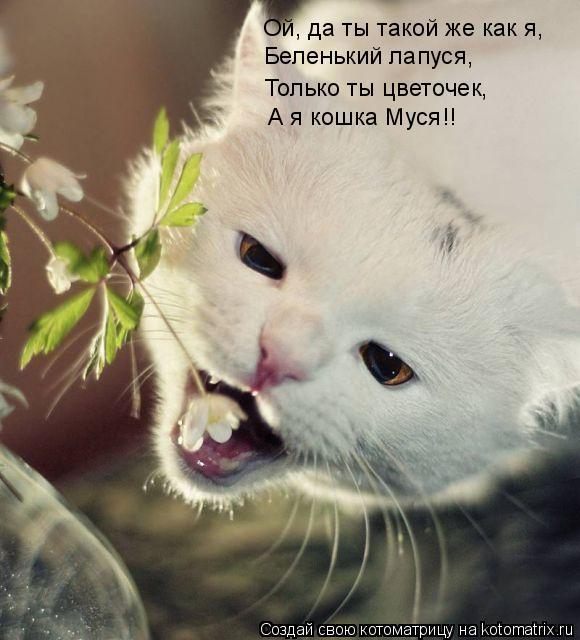 Котоматрица: Ой, да ты такой же как я, Беленький лапуся, Только ты цветочек, А я кошка Муся!!